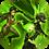 lifecurse skill for Bloodbraid in raid shadow legends
